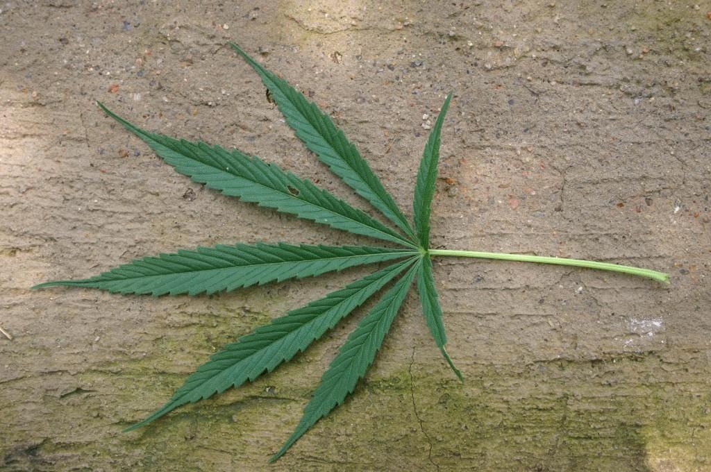 leaf-on-ground